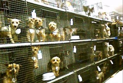 Celda de perros