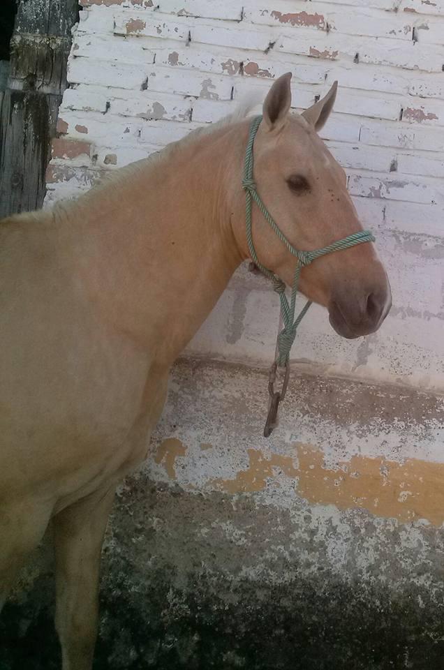 Parásitos de caballos