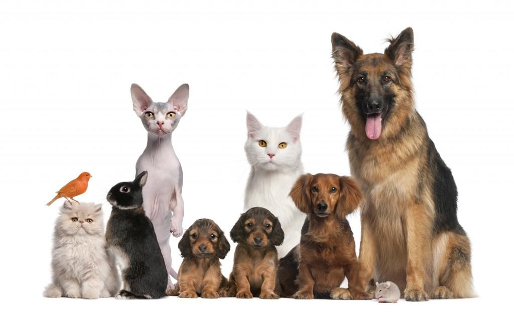 Enfermedades de las mascotas en Otoño