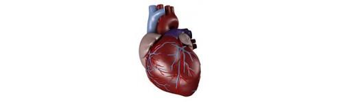 Cardiología y Circulación